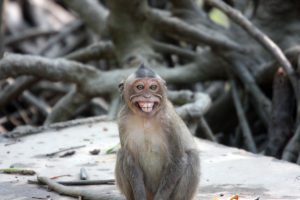 Monkey – Can Gio, Vietnam
