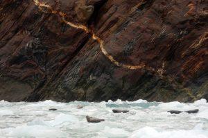 Seals – Juneau, Alaska