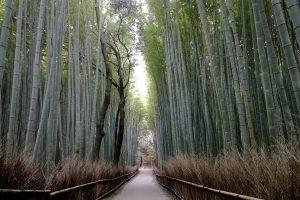 Arashiyama Bamboo Grove – Japan