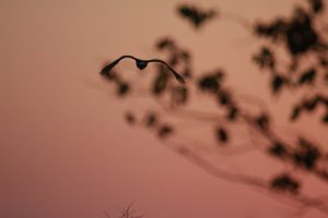 Bird in Sunset – South Africa