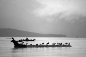 Birds – Juneau, Alaska