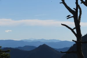 Birds Silhouette –Washington