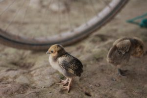 Birds – Vietnam