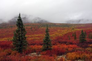 Denali National Park – Alaska